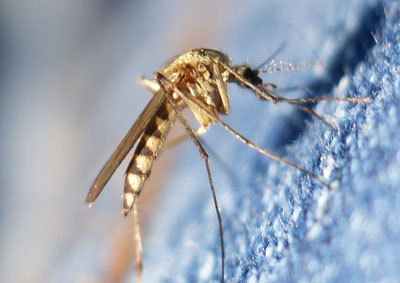 Icon water flood mosquitoes