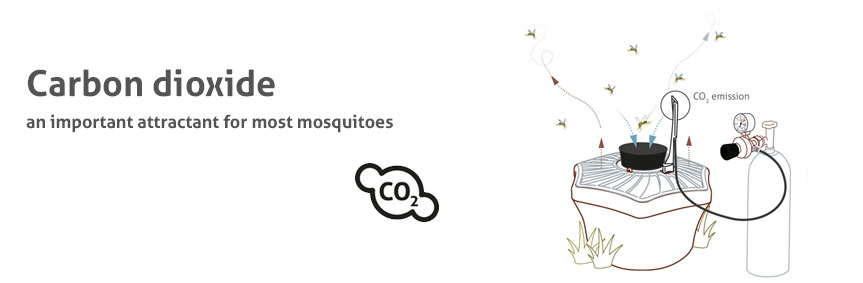 Carbon dioxide (also known as carbonic acid or CO2) is the most important attractant for the majority of blood-sucking insects.