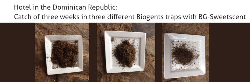 Hotel in the Dominican Republic: Catch of three weeks in three different Biogents traps with BG-Sweetscent